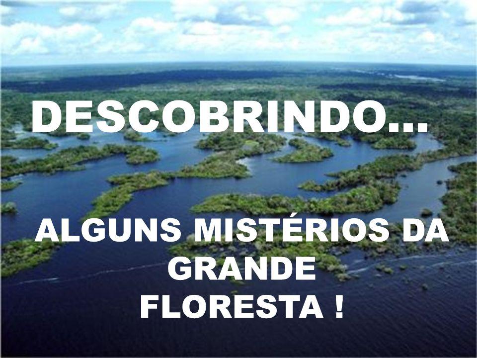 ALGUNS MISTÉRIOS DA GRANDE