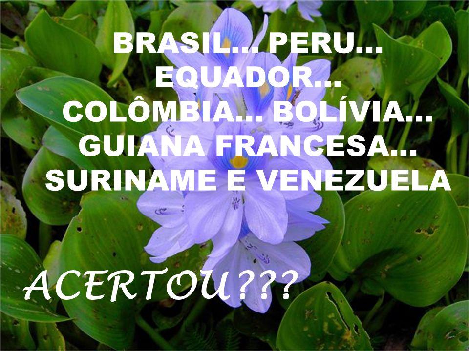 ACERTOU BRASIL... PERU... EQUADOR... COLÔMBIA... BOLÍVIA...