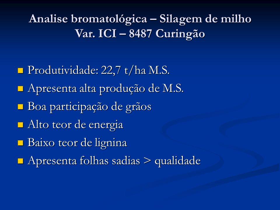 Analise bromatológica – Silagem de milho Var. ICI – 8487 Curingão