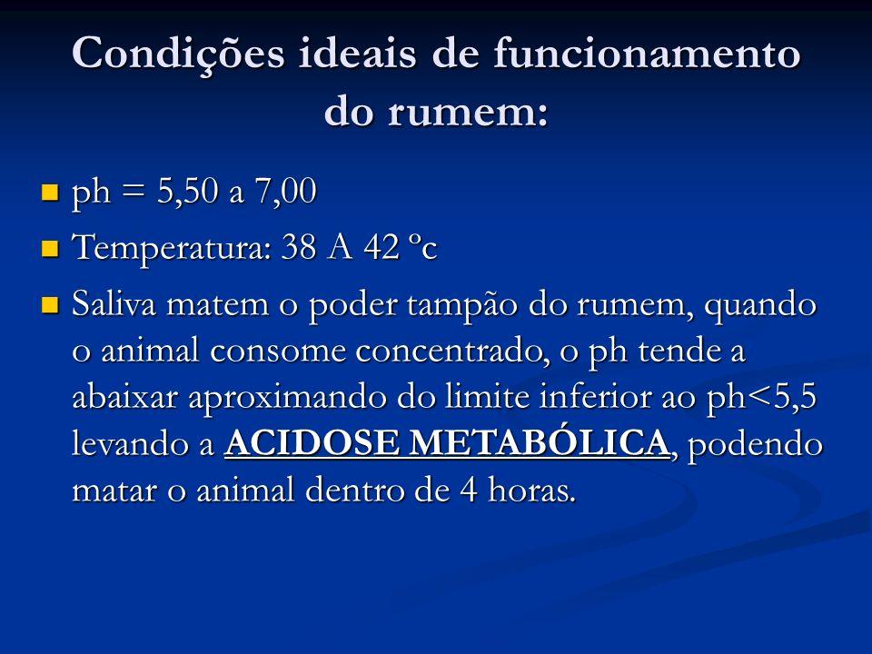 Condições ideais de funcionamento do rumem:
