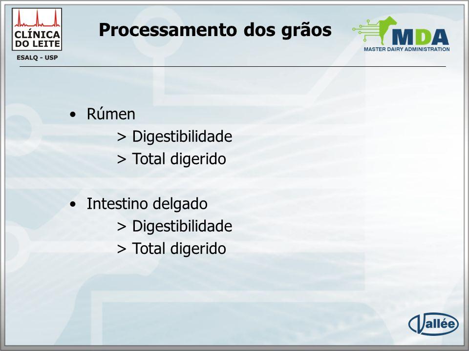 Processamento dos grãos