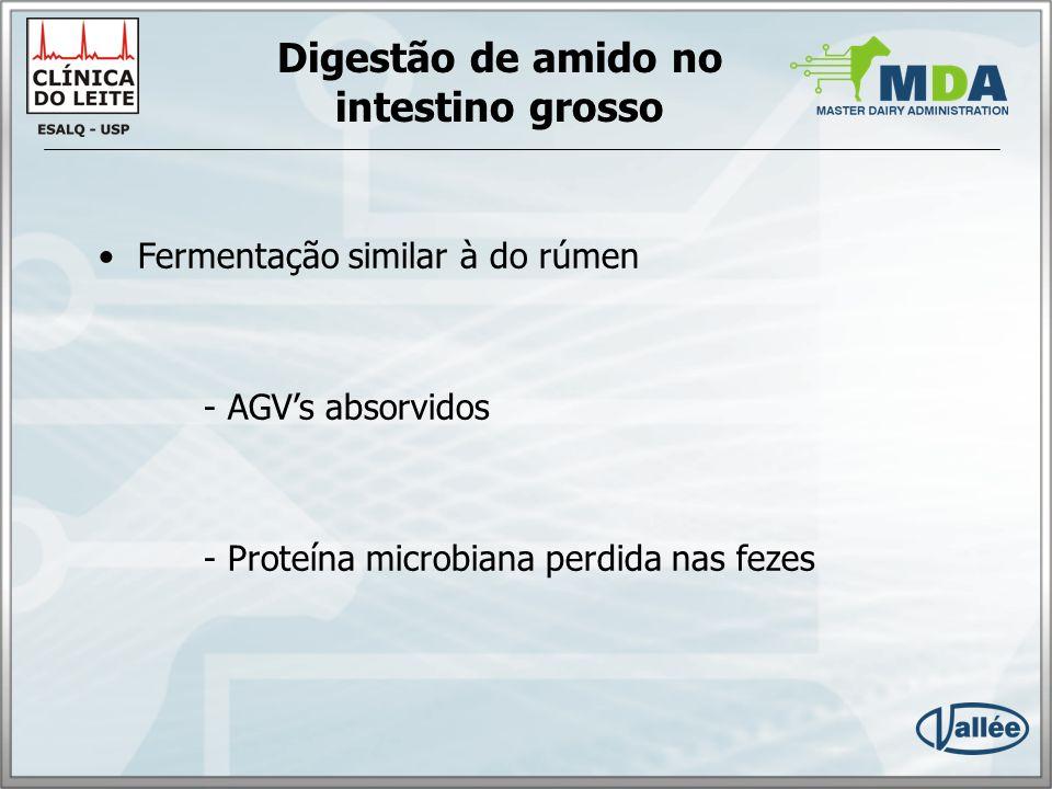 Digestão de amido no intestino grosso