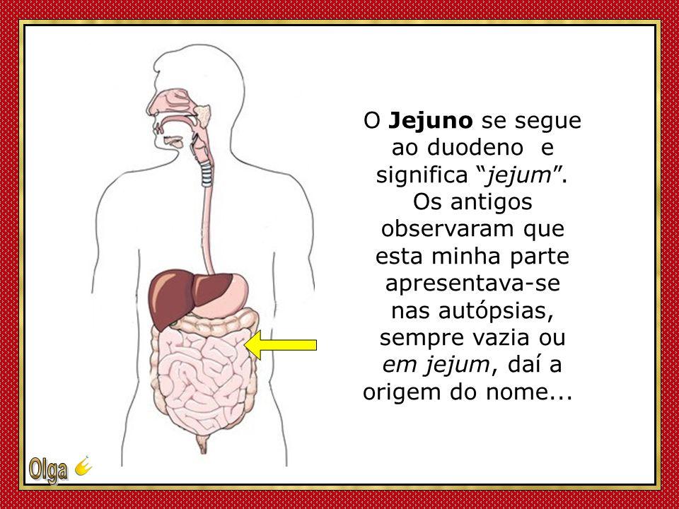 O Jejuno se segue ao duodeno e significa jejum .