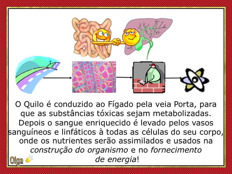 O Quilo é conduzido ao Fígado pela veia Porta, para que as substâncias tóxicas sejam metabolizadas.