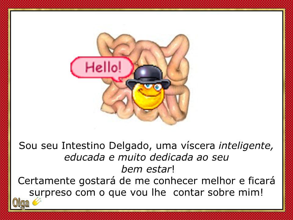 Sou seu Intestino Delgado, uma víscera inteligente, educada e muito dedicada ao seu