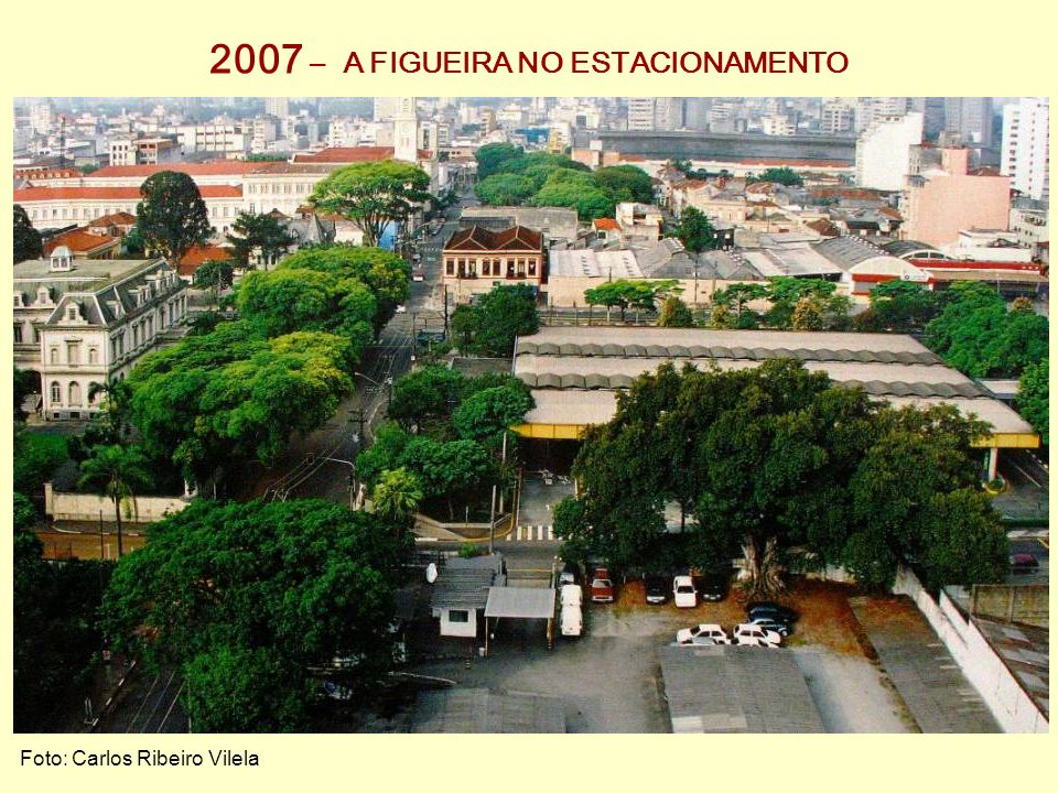 2007 – A FIGUEIRA NO ESTACIONAMENTO