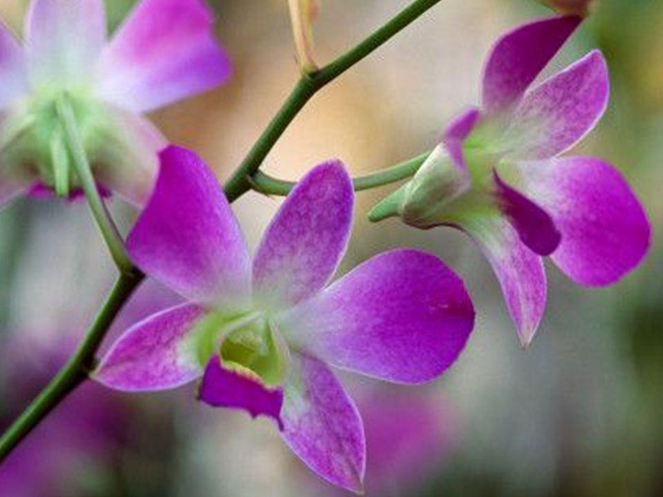 Mas a existência é farta – milhões e milhões de flores, milhões e milhões de pássaros, milhões de animais – tudo em abundância…