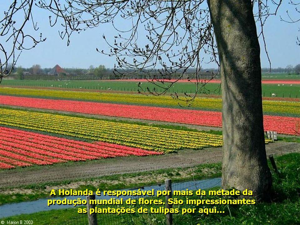 A Holanda é responsável por mais da metade da produção mundial de flores.