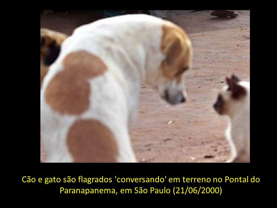 Cão e gato são flagrados conversando em terreno no Pontal do Paranapanema, em São Paulo (21/06/2000)