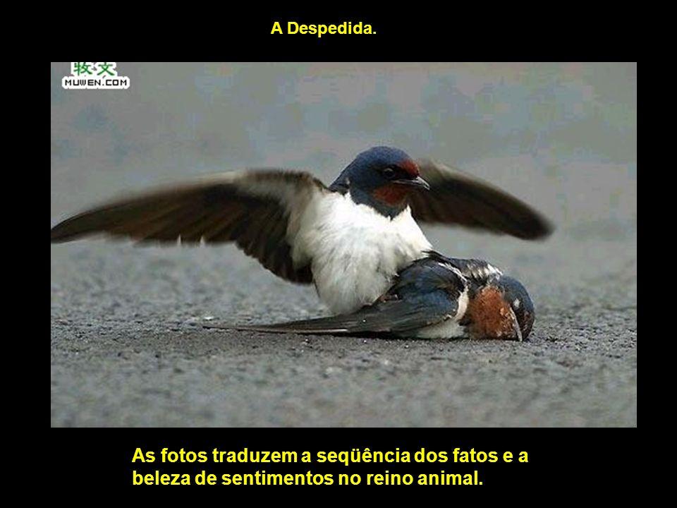 A Despedida. As fotos traduzem a seqüência dos fatos e a beleza de sentimentos no reino animal.