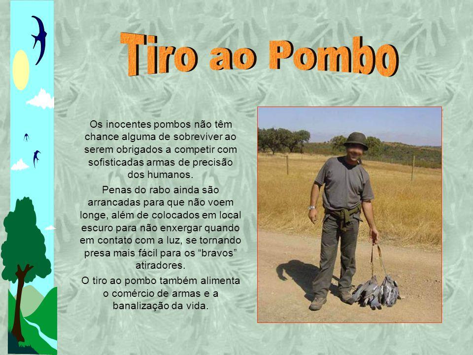 Tiro ao Pombo Os inocentes pombos não têm chance alguma de sobreviver ao serem obrigados a competir com sofisticadas armas de precisão dos humanos.