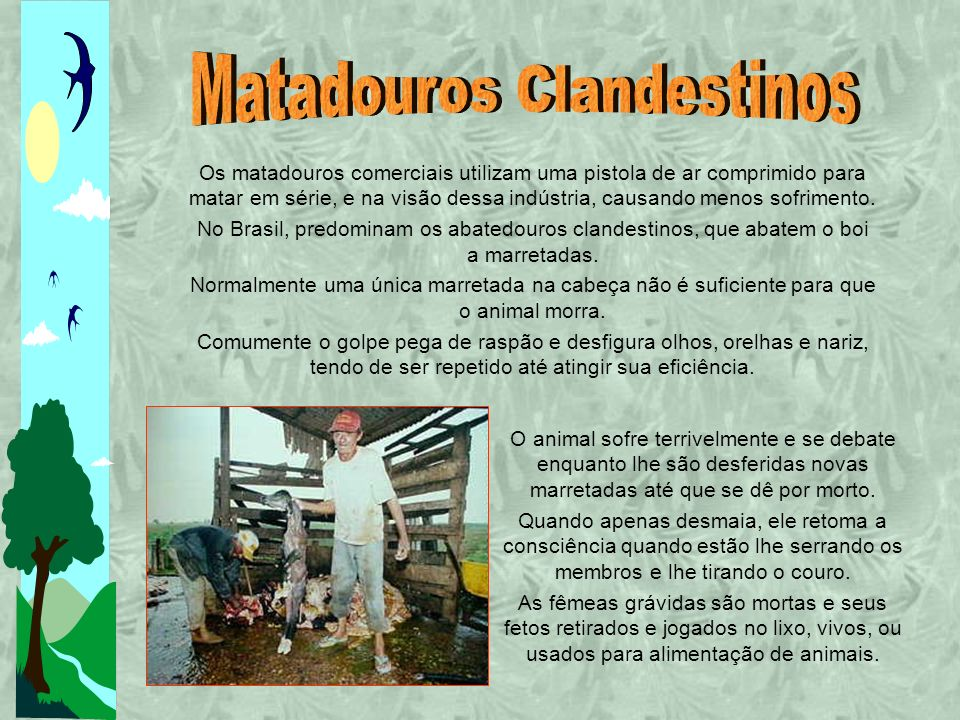 Matadouros Clandestinos