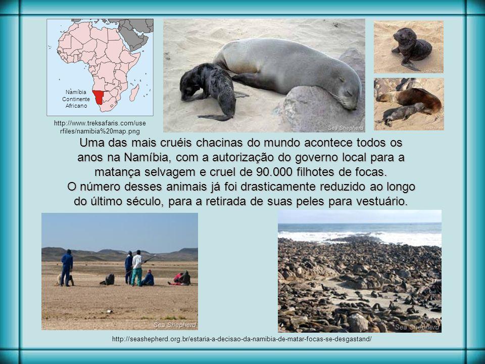 Uma das mais cruéis chacinas do mundo acontece todos os anos na Namíbia, com a autorização do governo local para a matança selvagem e cruel de 90.000 filhotes de focas.