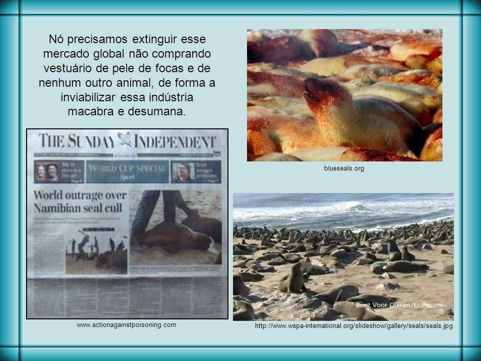 Nó precisamos extinguir esse mercado global não comprando vestuário de pele de focas e de nenhum outro animal, de forma a inviabilizar essa indústria macabra e desumana.