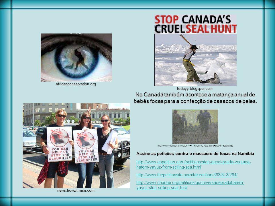 Assine as petições contra o massacre de focas na Namíbia