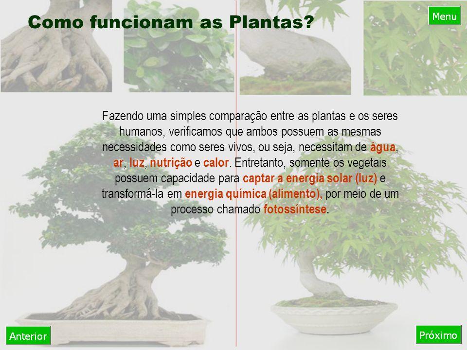 Como funcionam as Plantas