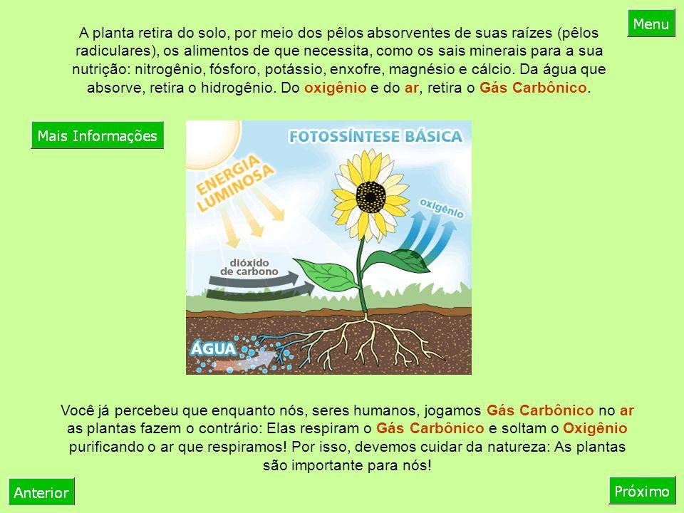 A planta retira do solo, por meio dos pêlos absorventes de suas raízes (pêlos radiculares), os alimentos de que necessita, como os sais minerais para a sua nutrição: nitrogênio, fósforo, potássio, enxofre, magnésio e cálcio. Da água que absorve, retira o hidrogênio. Do oxigênio e do ar, retira o Gás Carbônico.