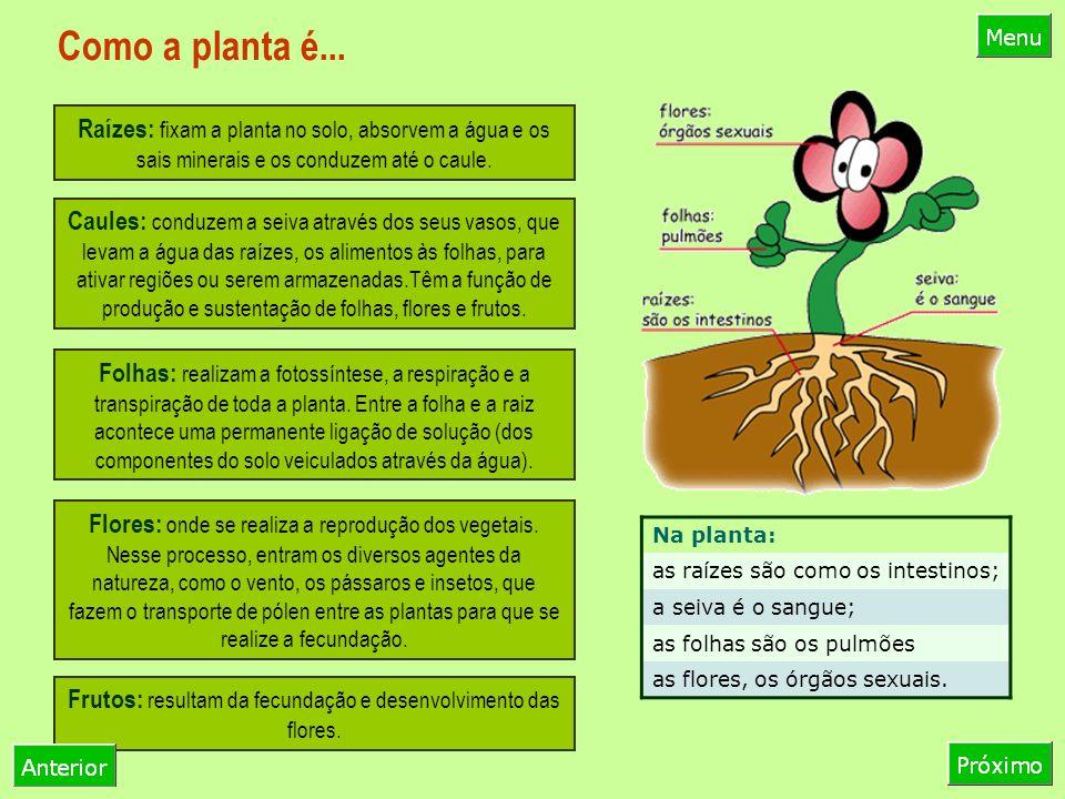Frutos: resultam da fecundação e desenvolvimento das flores.