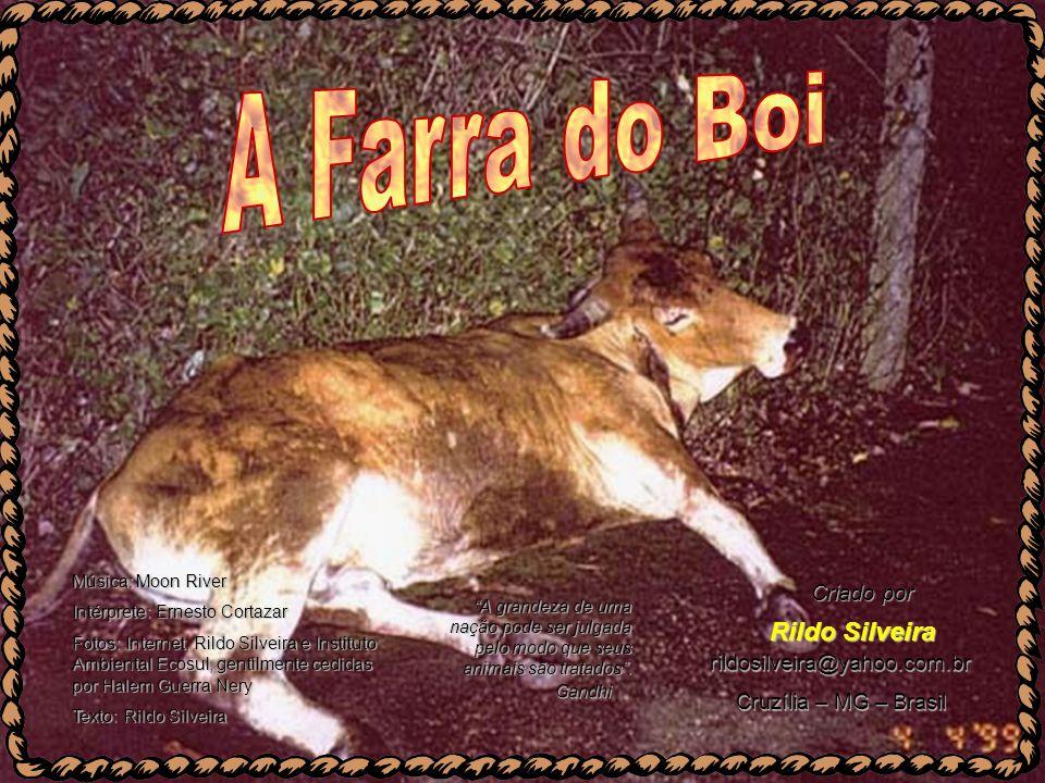 A Farra do Boi Rildo Silveira Criado por rildosilveira@yahoo.com.br