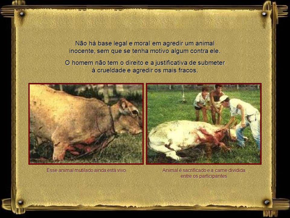 Animal é sacrificado e a carne dividida entre os participantes