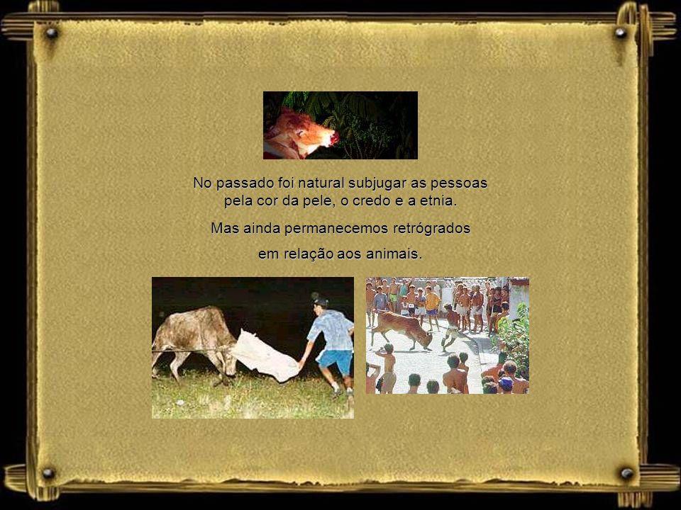Mas ainda permanecemos retrógrados em relação aos animais.