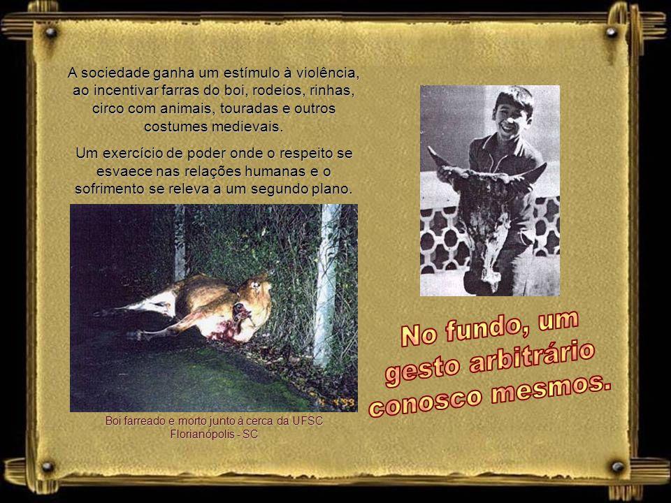 Boi farreado e morto junto à cerca da UFSC Florianópolis - SC