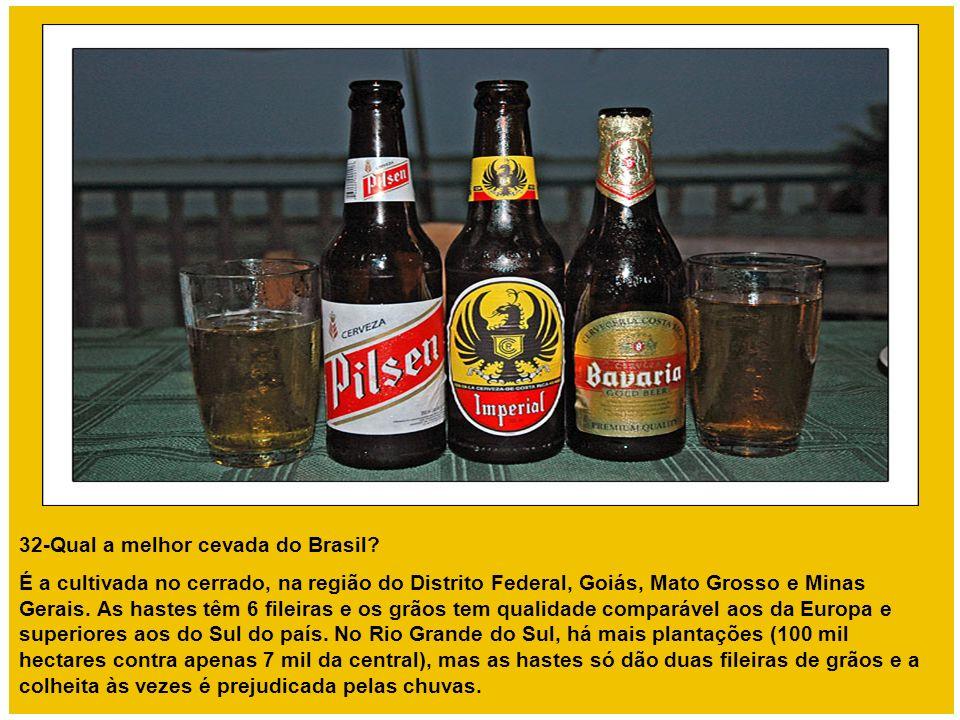 32-Qual a melhor cevada do Brasil