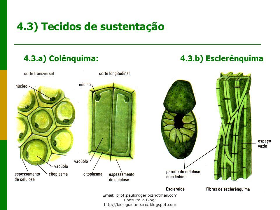 4.3) Tecidos de sustentação
