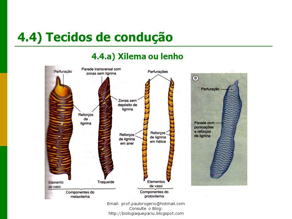 4.4) Tecidos de condução 4.4.a) Xilema ou lenho