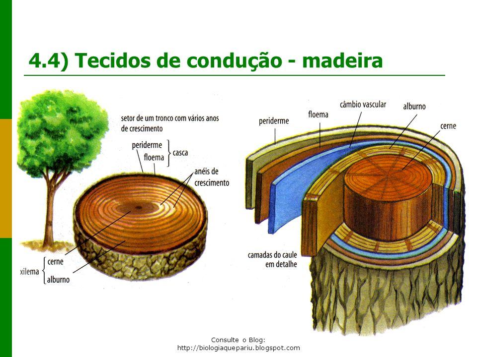 4.4) Tecidos de condução - madeira