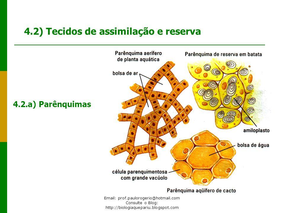4.2) Tecidos de assimilação e reserva