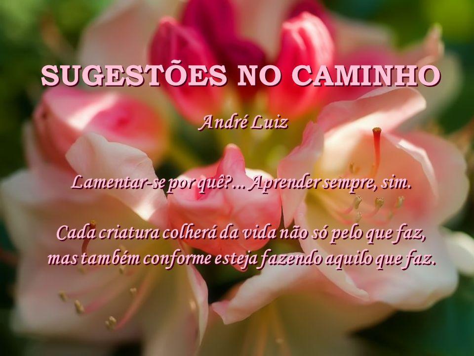 SUGESTÕES NO CAMINHO André Luiz