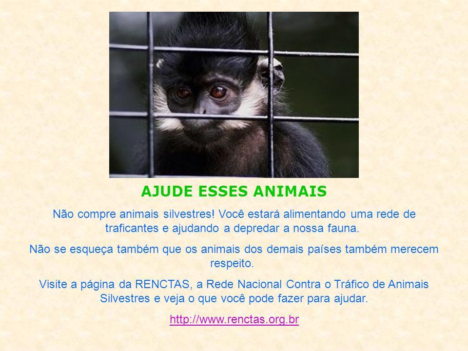 AJUDE ESSES ANIMAIS Não compre animais silvestres! Você estará alimentando uma rede de traficantes e ajudando a depredar a nossa fauna.