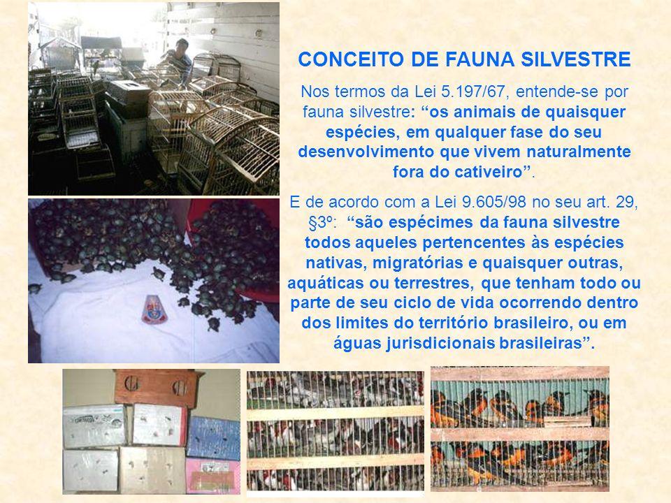 CONCEITO DE FAUNA SILVESTRE