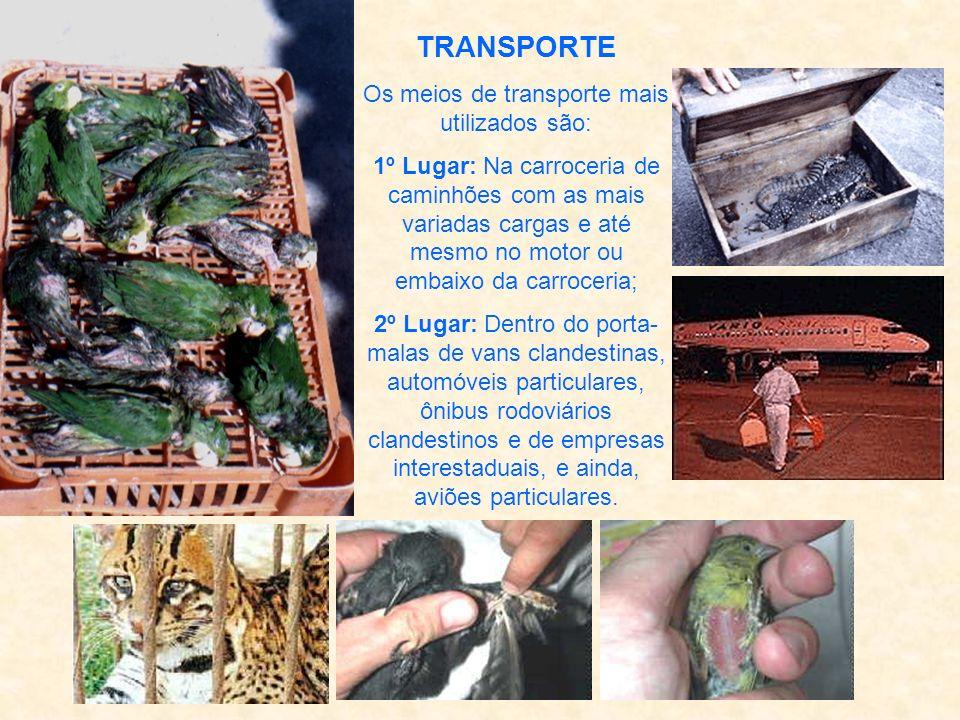 Os meios de transporte mais utilizados são: