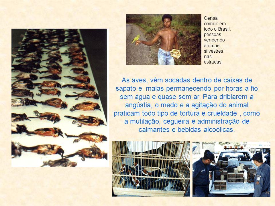 Censa comun em todo o Brasil: pessoas vendendo animais silvestres nas estradas.