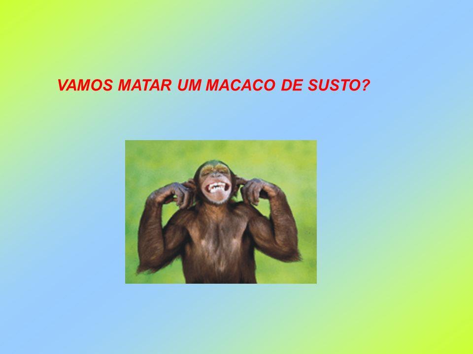 VAMOS MATAR UM MACACO DE SUSTO