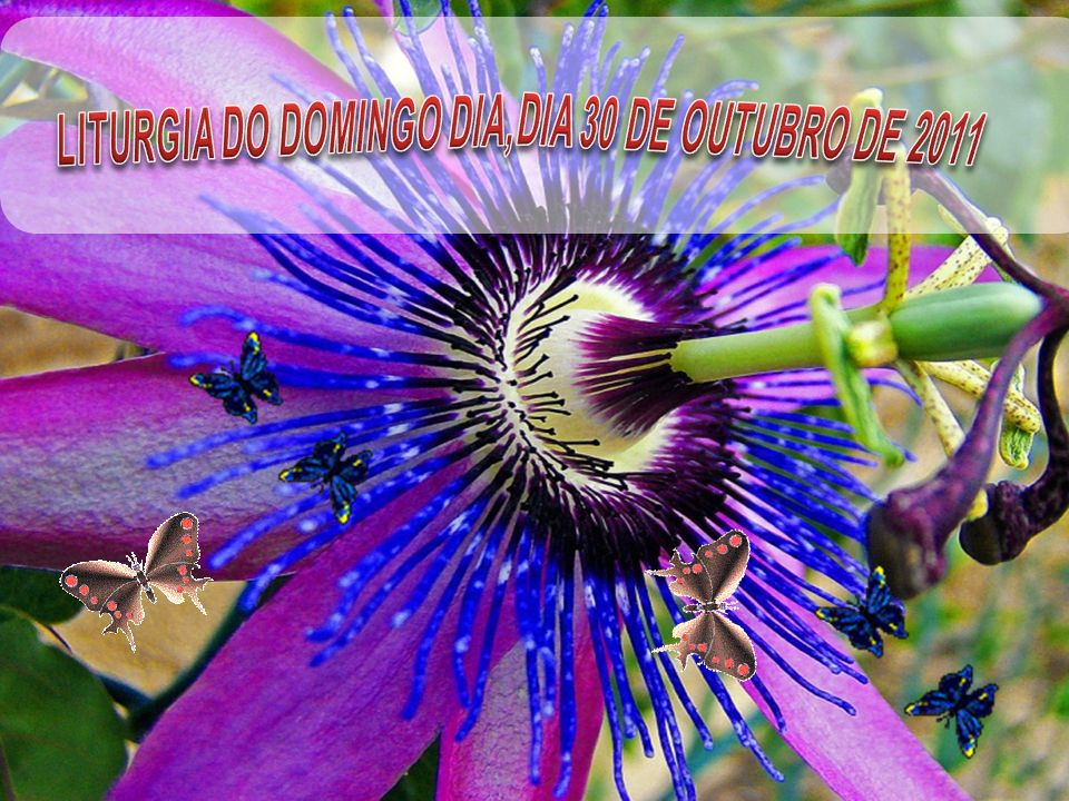 LITURGIA DO DOMINGO DIA,DIA 30 DE OUTUBRO DE 2011