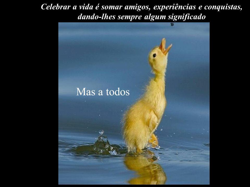 Celebrar a vida é somar amigos, experiências e conquistas,