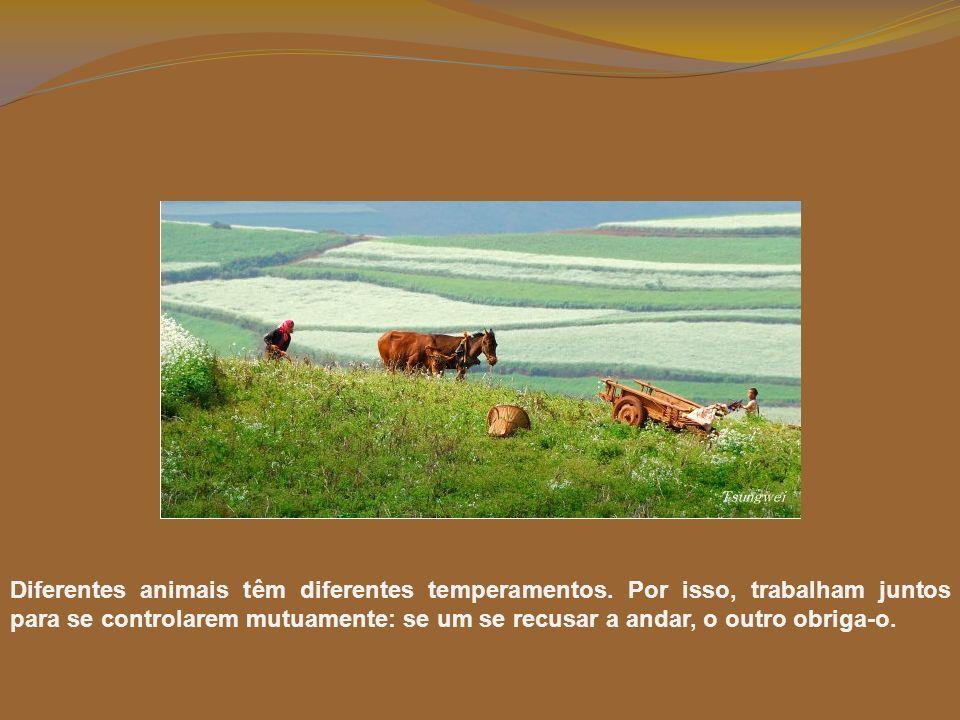 Diferentes animais têm diferentes temperamentos