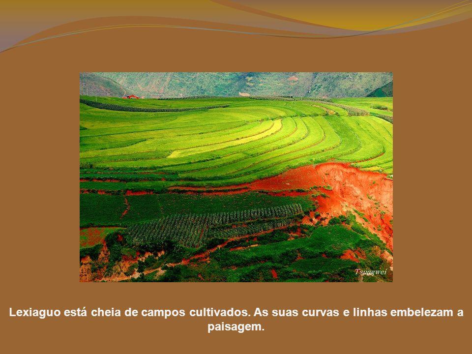 Lexiaguo está cheia de campos cultivados