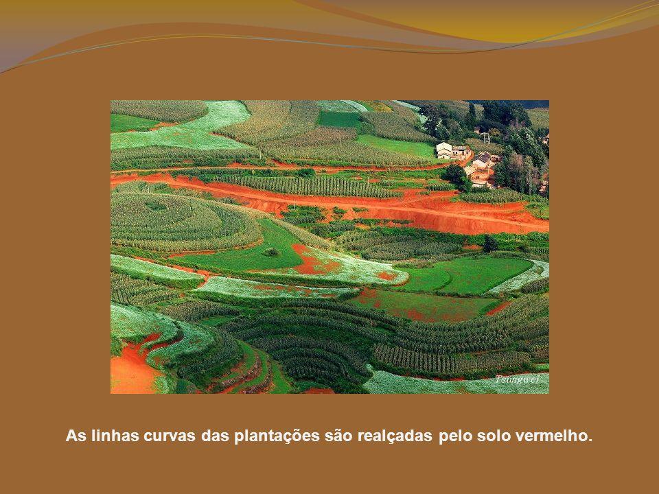 As linhas curvas das plantações são realçadas pelo solo vermelho.