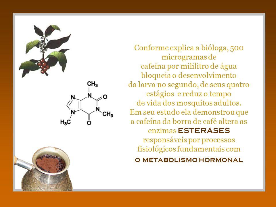 Conforme explica a bióloga, 500 microgramas de cafeína por mililitro de água bloqueia o desenvolvimento da larva no segundo, de seus quatro estágios e reduz o tempo de vida dos mosquitos adultos.