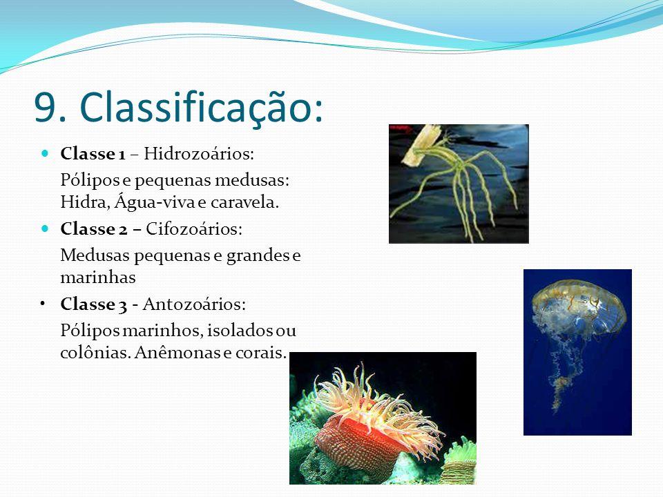 9. Classificação: Classe 1 – Hidrozoários: