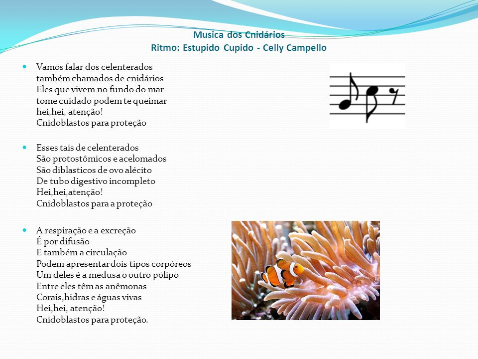 Musica dos Cnidários Ritmo: Estupido Cupido - Celly Campello