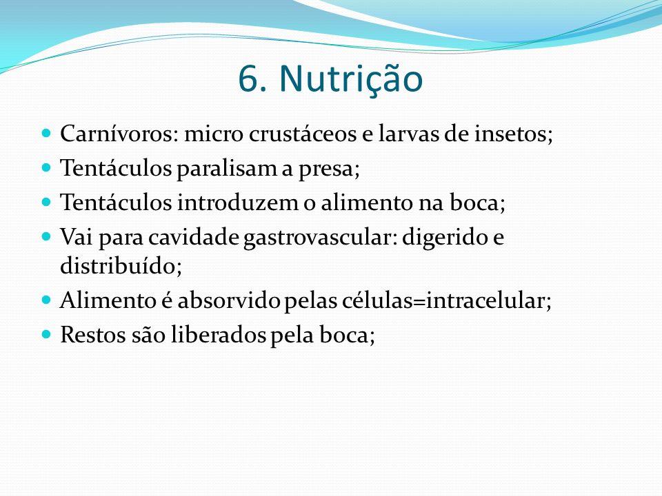 6. Nutrição Carnívoros: micro crustáceos e larvas de insetos;