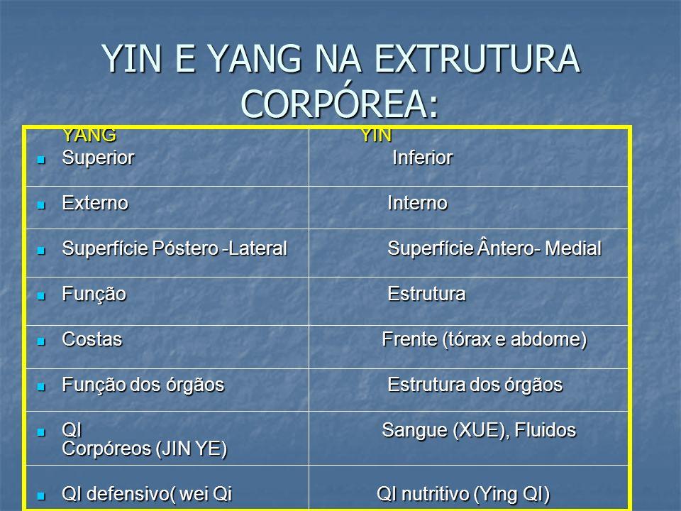 YIN E YANG NA EXTRUTURA CORPÓREA: