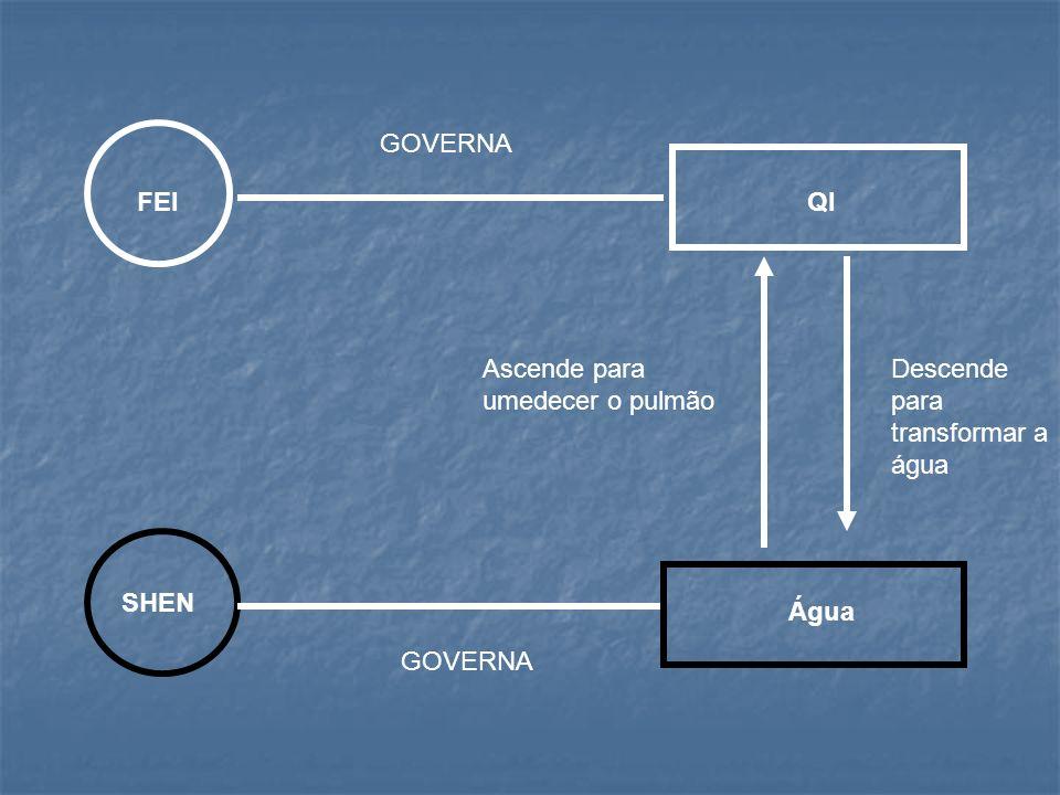 GOVERNA FEI QI Ascende para umedecer o pulmão Descende para transformar a água SHEN Água GOVERNA