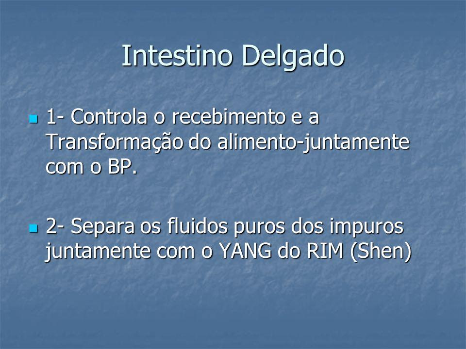 Intestino Delgado 1- Controla o recebimento e a Transformação do alimento-juntamente com o BP.