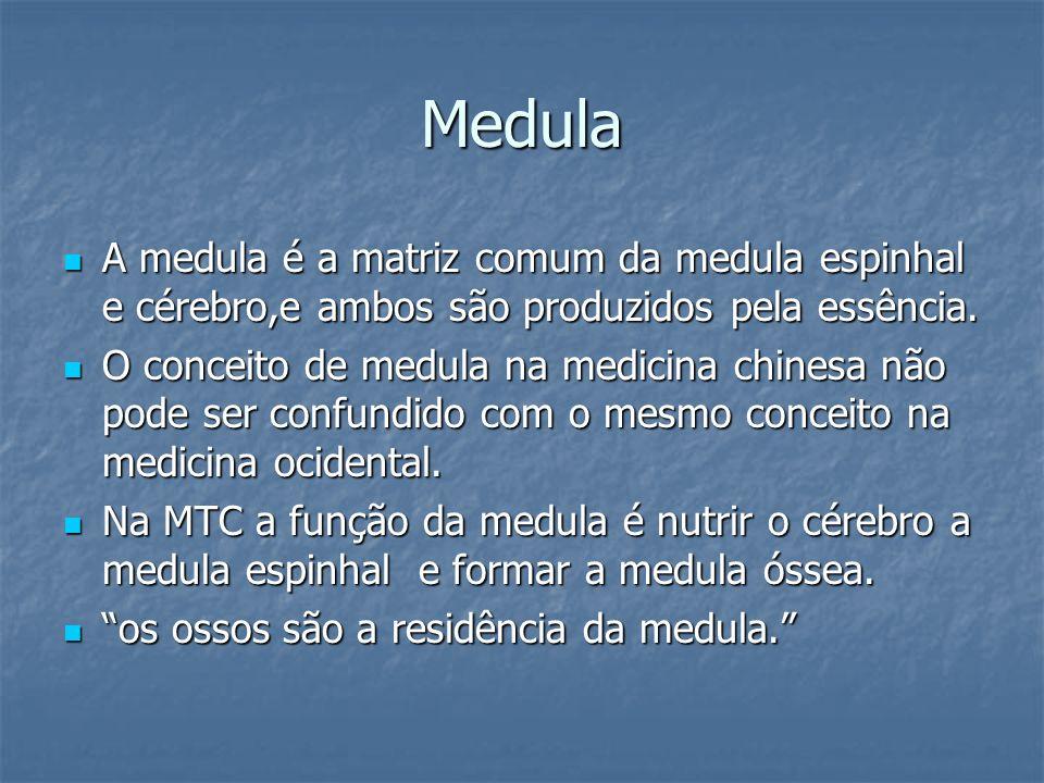 Medula A medula é a matriz comum da medula espinhal e cérebro,e ambos são produzidos pela essência.